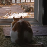 Cat Watching Squirrels - Free high Resolution Photo