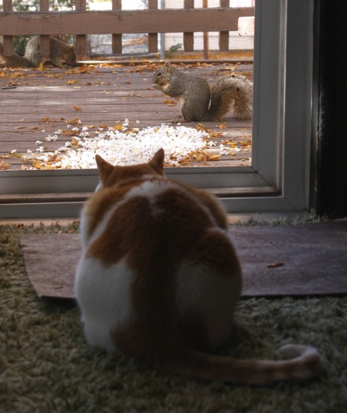 Cat Watching Squirrels - Free high Resolution Photo
