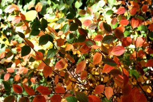 Colorful Autumn Leaves Texture - Free High Resolution Photo