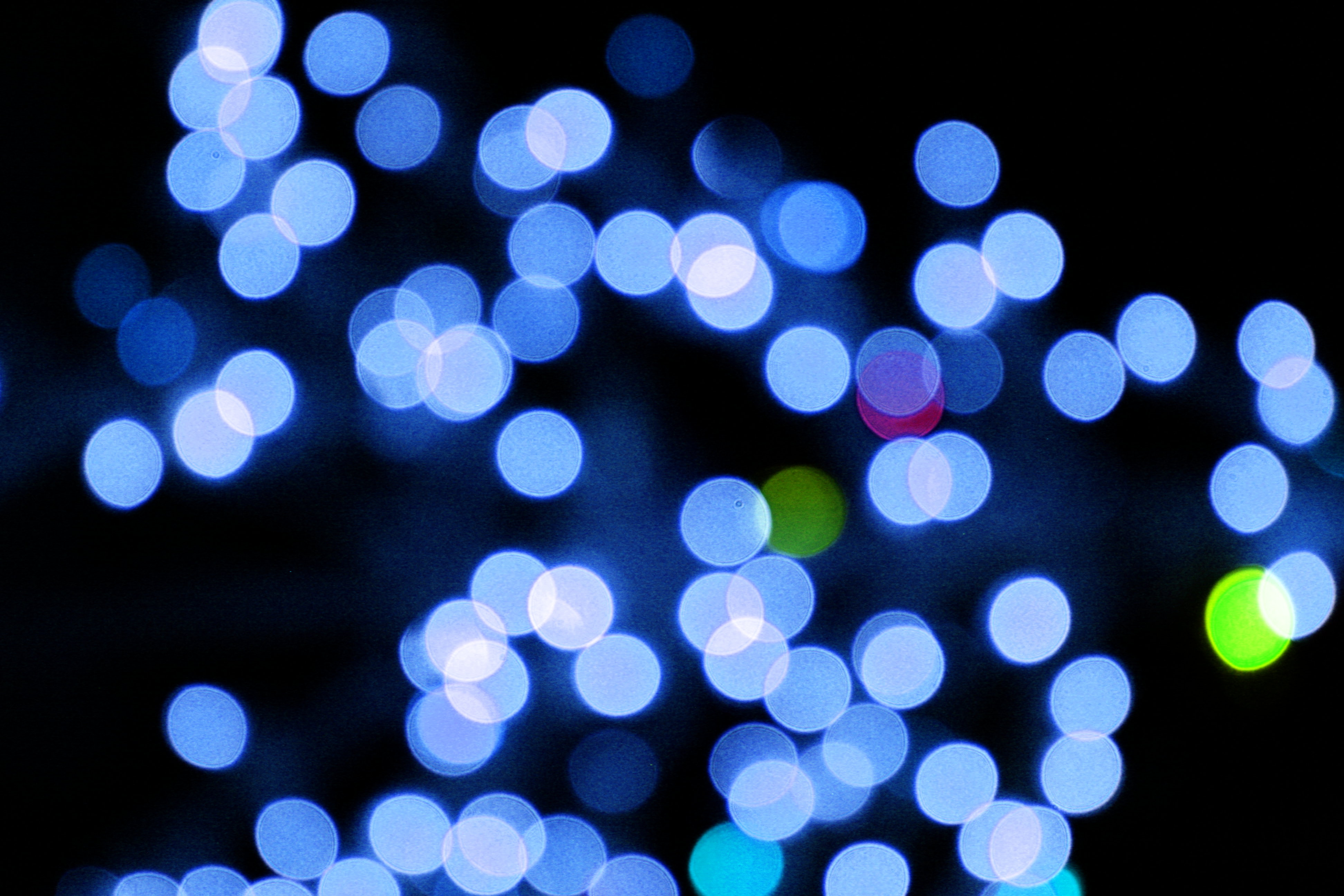 Blurred Christmas Lights Blue Picture | Free Photograph ...