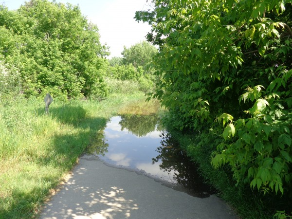 Flooded Path - Free High Resolution Photo