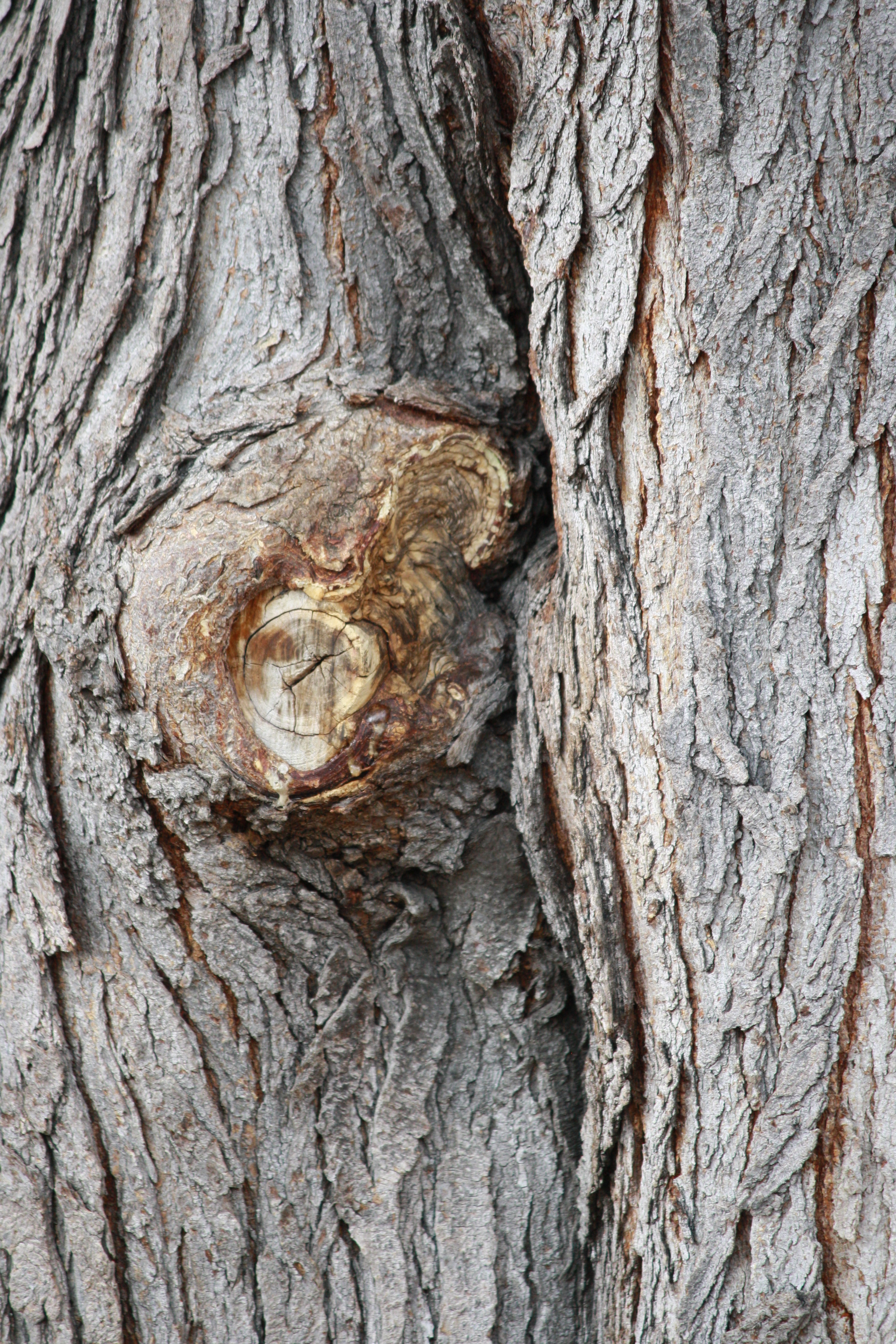 Tree Trunk With Knot Picture Free Photograph Photos