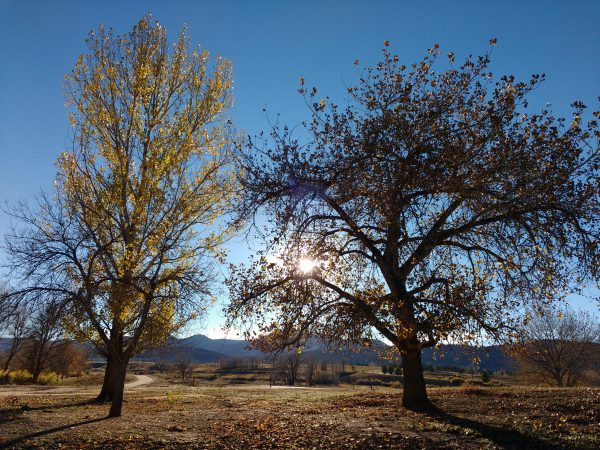 Sun Through Autumn Trees - Free High Resolution Photo