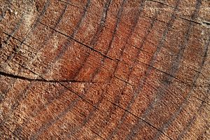 Tree Rings Closeup Texture - Free High Resolution Photo