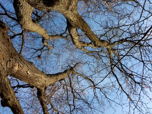Winter Tree Branches From Below - Free High Resolution Photo