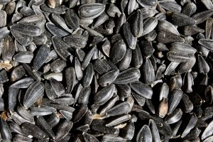 Black Sunflower Seeds Close Up - Free High Resolution Photo