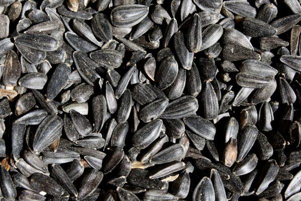 Black Sunflower Seeds Close Up - Free High Resolution Photo