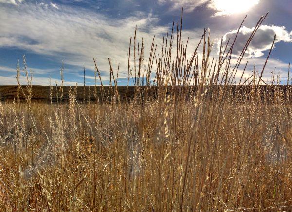Dry Fall Prairie Grass Close Up - Free High Resolution Photo