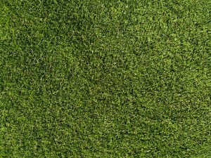 Grass Lawn Texture - Free High Resolution Photo