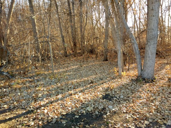 Grove of Trees in Late Fall - Free High Resolution Photo
