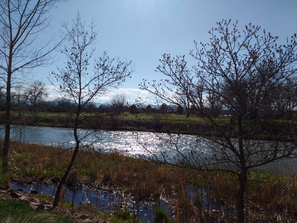 Sun Reflected in River on a Spring Day - Free High Resolution Photo