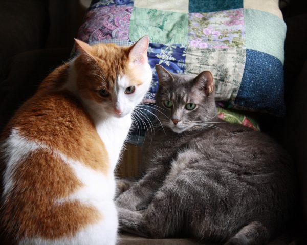 Two Tabby Cats - Free High Resolution Photo