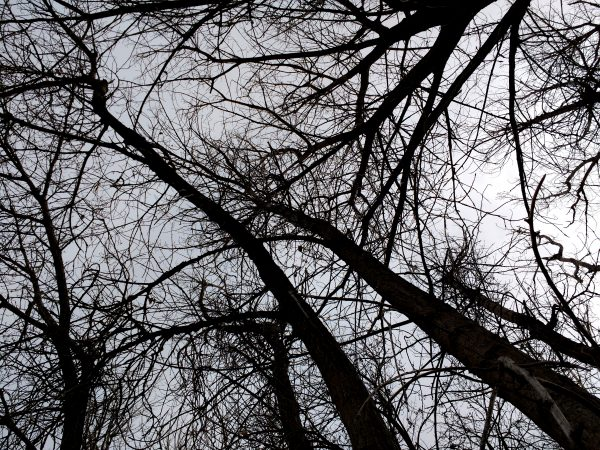 Leafless Tree Branches from Below - Free High Resolution Photo