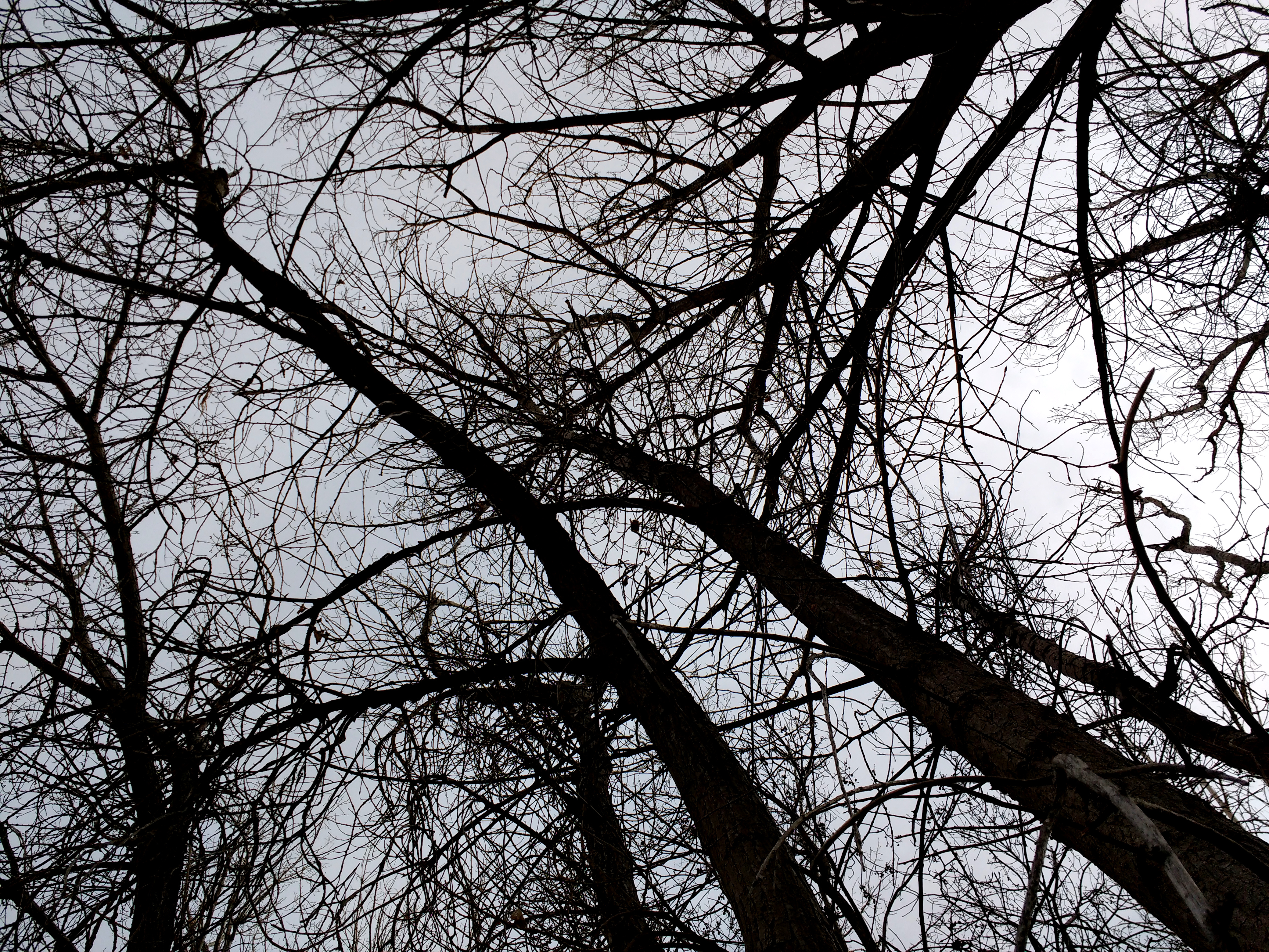 Leafless Tree Branches From Below Picture Free