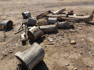 Cut Logs from Fallen Tree - Free High Resolution Photo