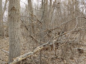Fallen Tree Branches in Winter Woods - Free High Resolution Photo