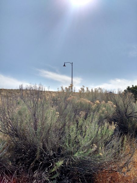 Rabbitbrush Plant with Lamp Post in Background - Free High Resolution Photo