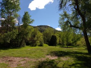 Grass and Trees with Hill in Background - Free High Resolution Photo