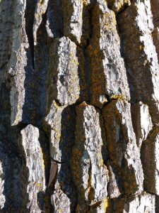 Tree Bark with Orange Lichen - Free High Resolution Photo