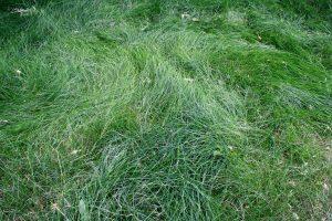 Tall Grass - Free High Resolution Photo