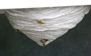 Yellowjacket Nest - Free High Resolution Photo