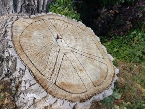 Peace Sign Carved in Tree Stump - Free High Resolution Photo