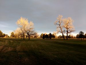 Leafless Fall Trees in the Sunlight - Free High Resolution Photo