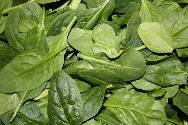 Baby Spinach Leaves - Free High Resolution Photo