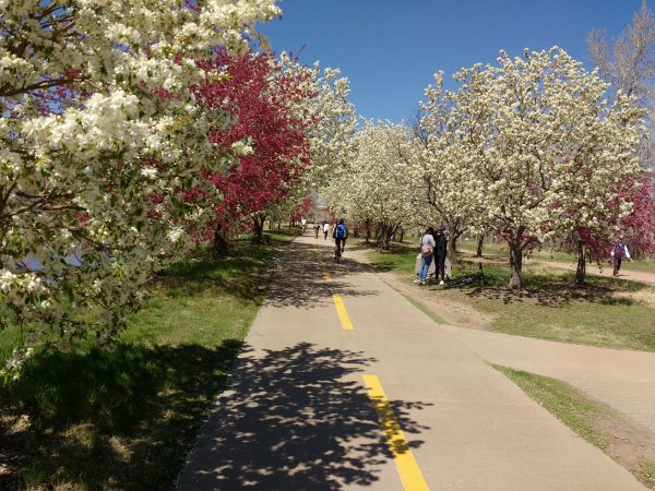Blooming Crabapple Trees along South Platte Bike Path - Free High Resolution Photo