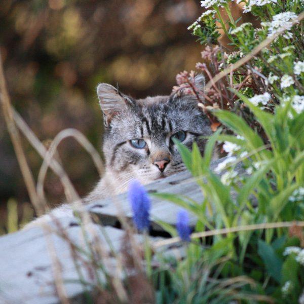 Cat Peeking through Flowers - Free High Resolution Photo