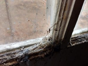 Cobwebs and Dead Insects on Window Sill - Free High Resolution Photo