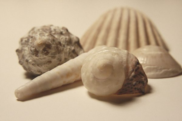 Sea Shells - Free High Resolution Photo