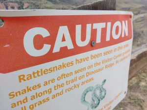 Caution Rattlesnakes Sign - Free High Resolution Photo