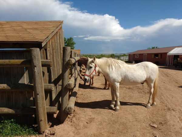 Horses at Stables - Free High Resolution Photo