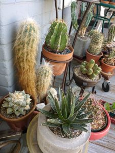 Cactus Plants - Free High Resolution Photo