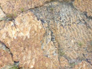 Fossilized Ripple Marks - Free High Resolution Photo