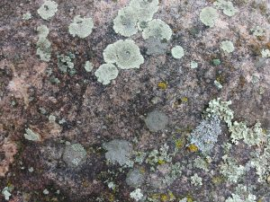 Lichen on Rock Face - Free High Resolution Photo