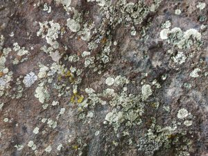 Green Lichen on Rock Surface - Free High Resolution Photo