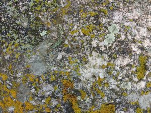 Rock Face with Lichen Texture - Free High Resolution Photo