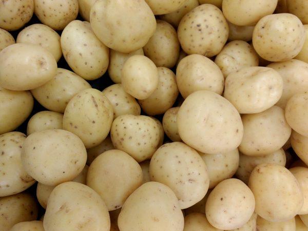 Yukon Gold Potatoes - Free High Resolution Photo