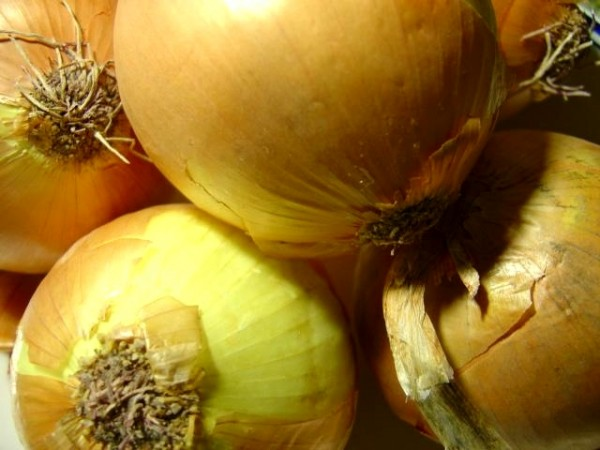 close up photo of yellow onions