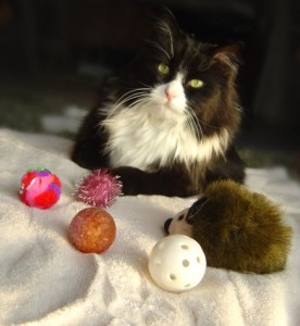 photo of black and white cat with toys