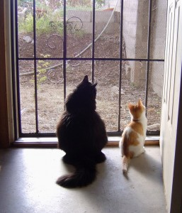 photo of a cat and kitten gazing out a screen door with sunlight pouring in