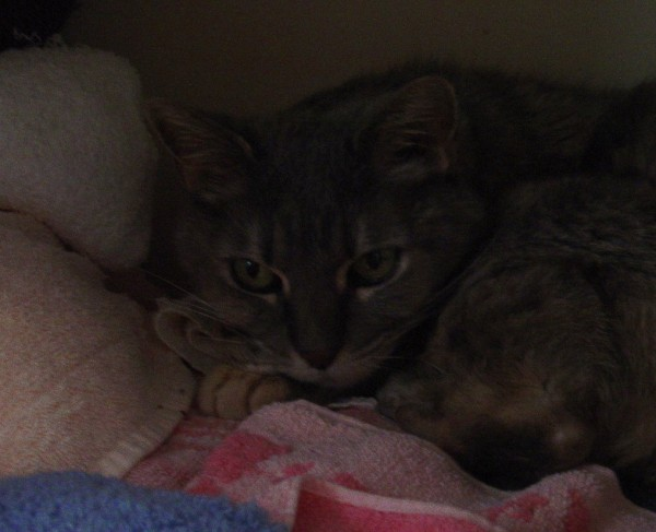 dark photo of a cat sleeping on towels in a linen closet