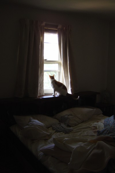 photo of a cat looking through a sunny window with bed in foreground