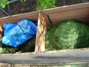 photo of grass composting in a compost bin