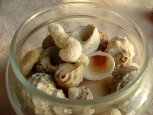 photo of a glass jar full of sea shells