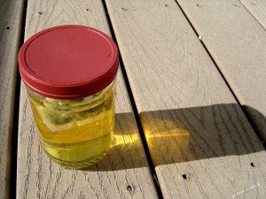 Photo of jar full of green tea in the sunlight