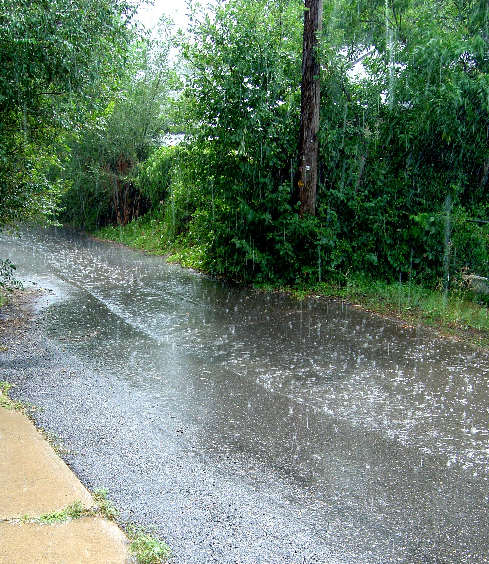 Sunny Rain Shower Picture Free Photograph Photos