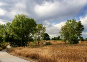 free photograph of a path through a meadow with tall grass and trees